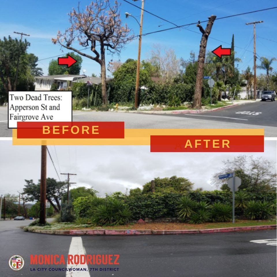 Regarding Dead Trees at Fairgrove Avenue and Apperson Street