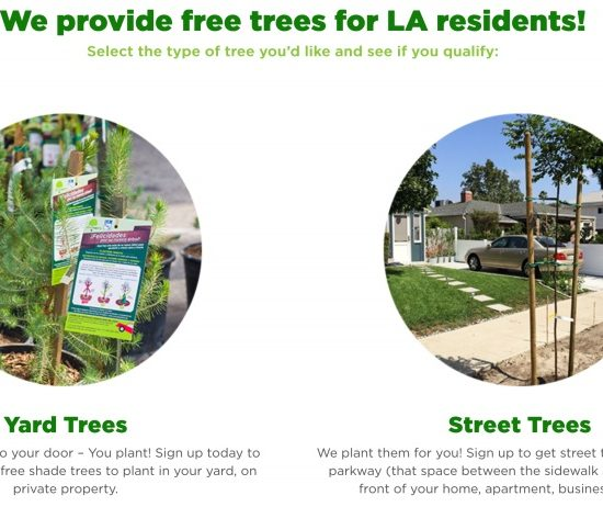 Free 5- gallon Shade Tree Adoptions