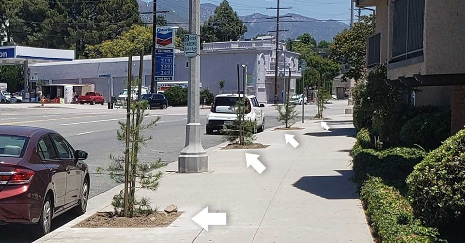 planted 57 new street trees along Foothill Blvd