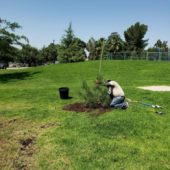 Planting 47 New Trees