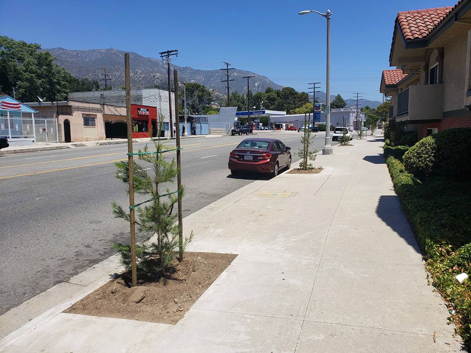 Sign up for a FREE street tree