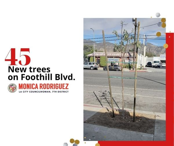 45 New Trees on Foothill Blvd.