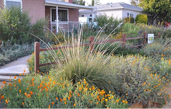 Councilwoman Monica Rodriguez - drought-tolerant landscaping
