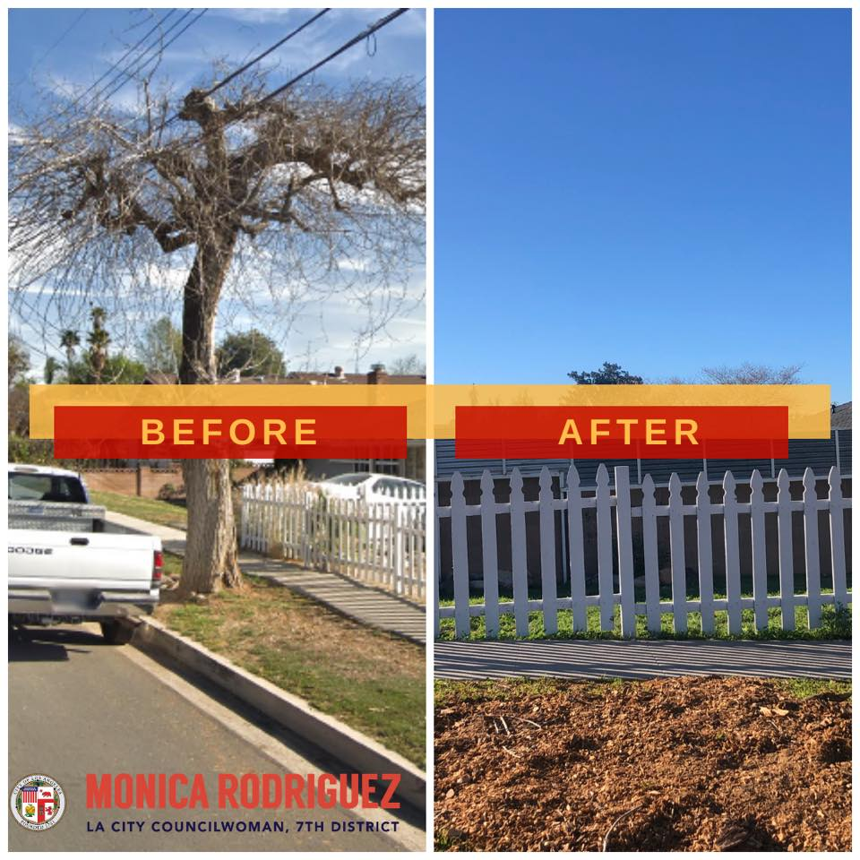 Removal of dead trees- Councilwoman Monica Rodriguez