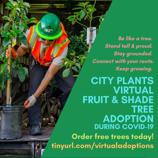 """Councilwoman Monica Rodriguez - The City is Pffering Limited Free Fruit and Shade Tree """"Virtual Adoptions"""""""