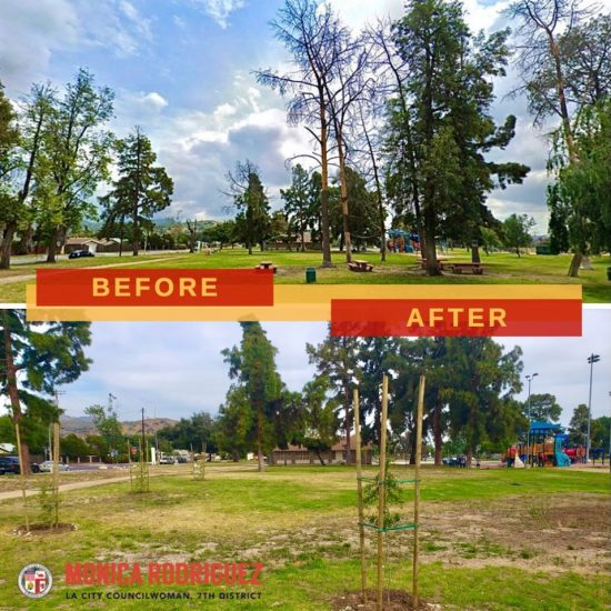 Addition of Thirty New Climate Resilient Trees at Stonehurst Park
