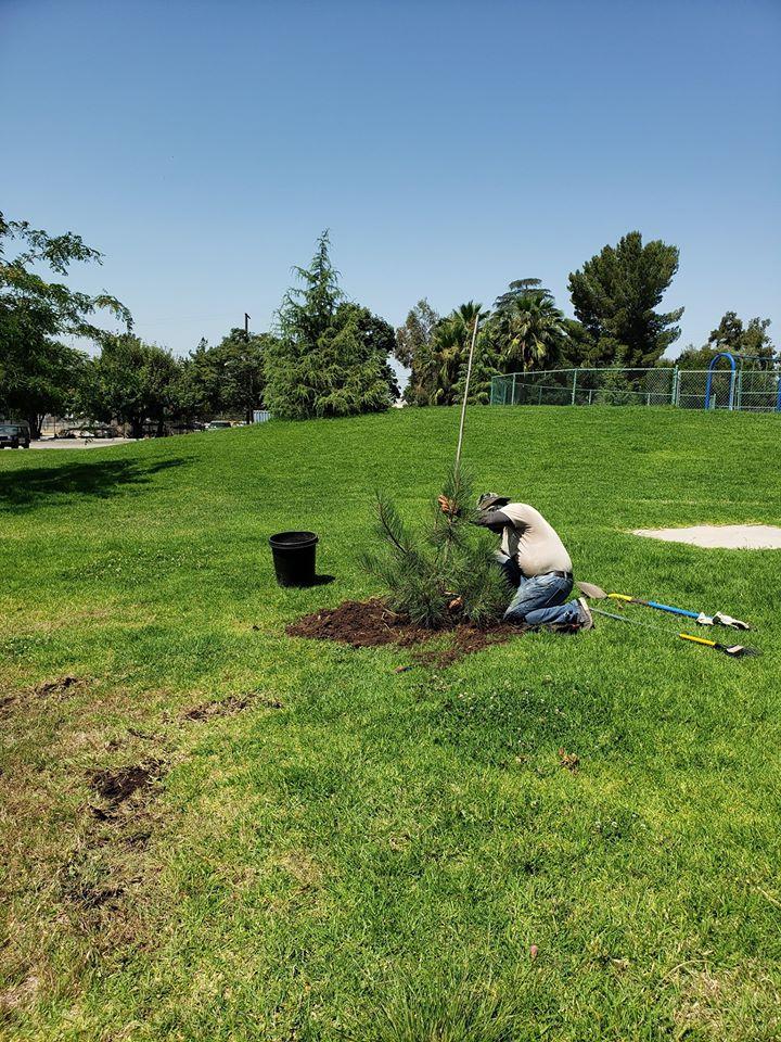 Planting 47 New Trees