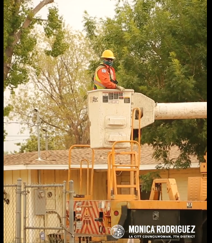Tree Trimming Requests in Sylmar